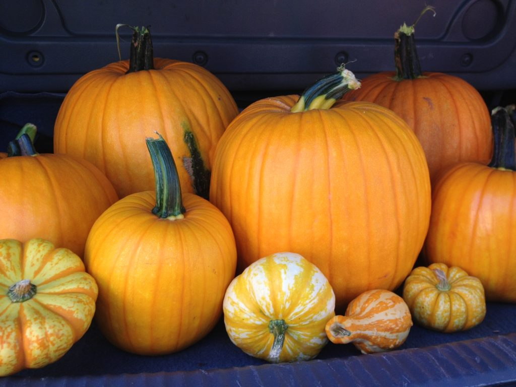 Family Fun at the Pumpkin Patch - Charlotte Siems